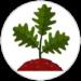 geokids-quercia